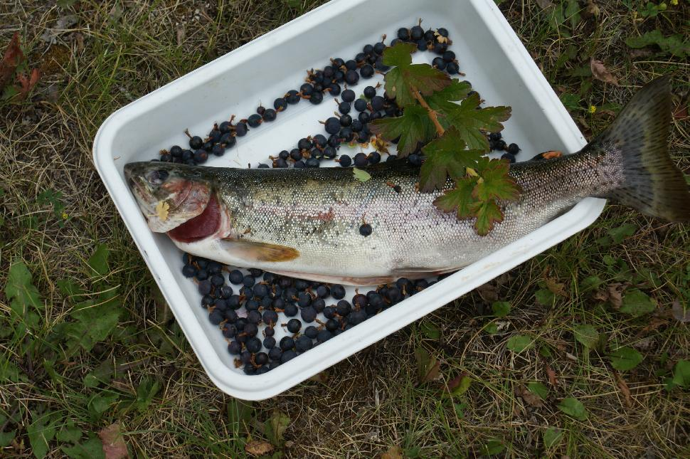 Trout and berries