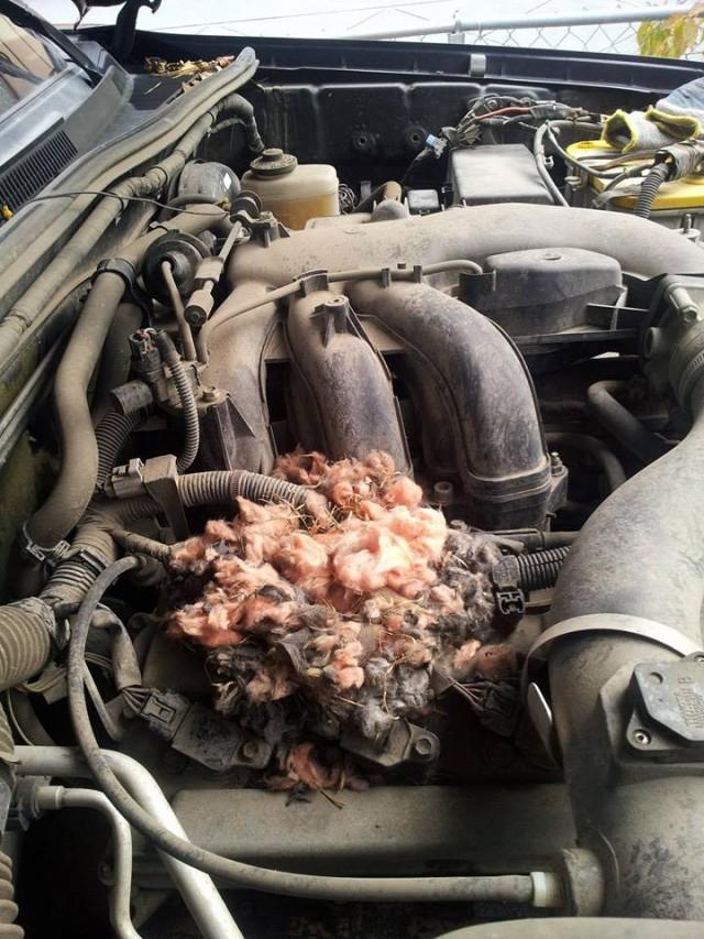 A rat's nest in the car's engine