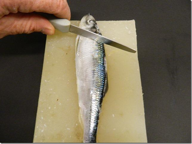 Step 1 on cutting your own herring strip