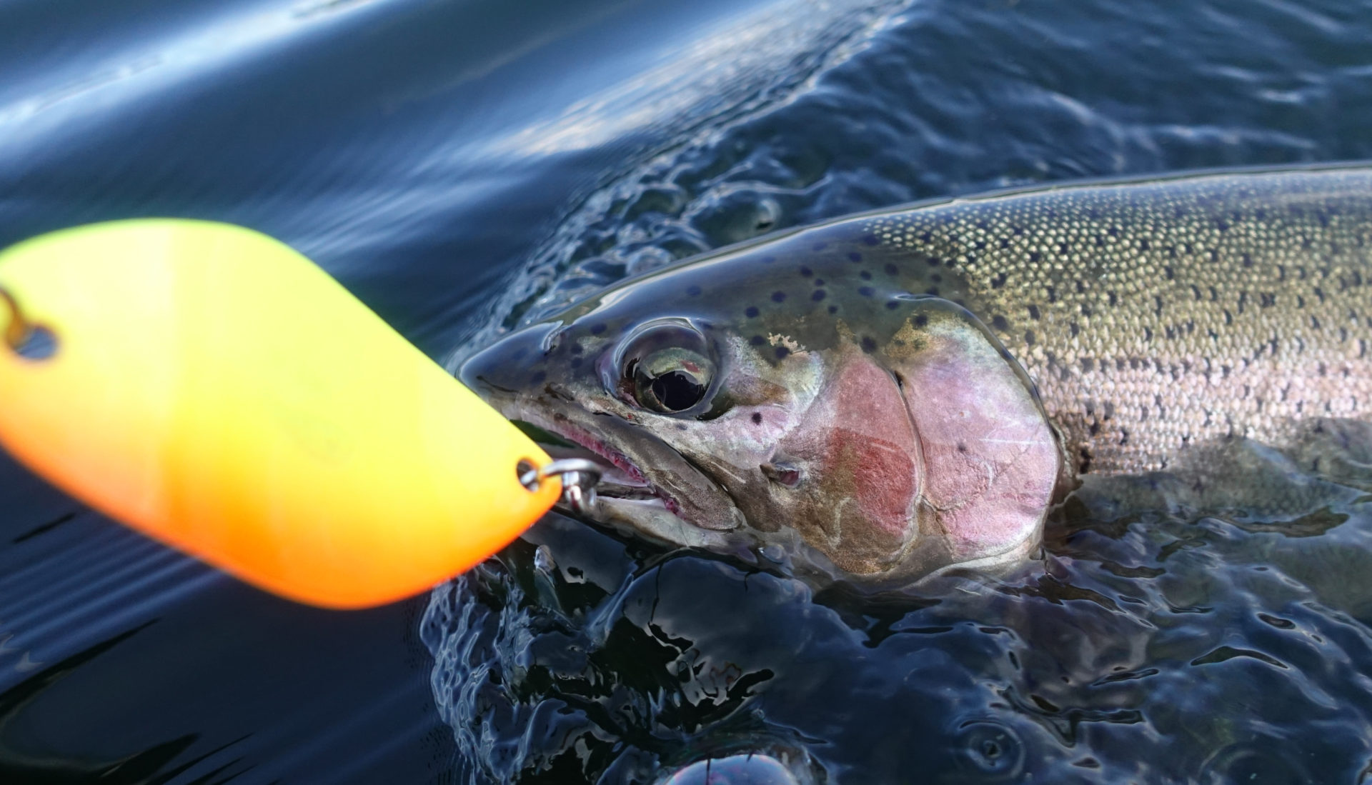 When matching the hatch doesn't work, having a couple of funky- coloured spoons can help get those picky fish to strike.