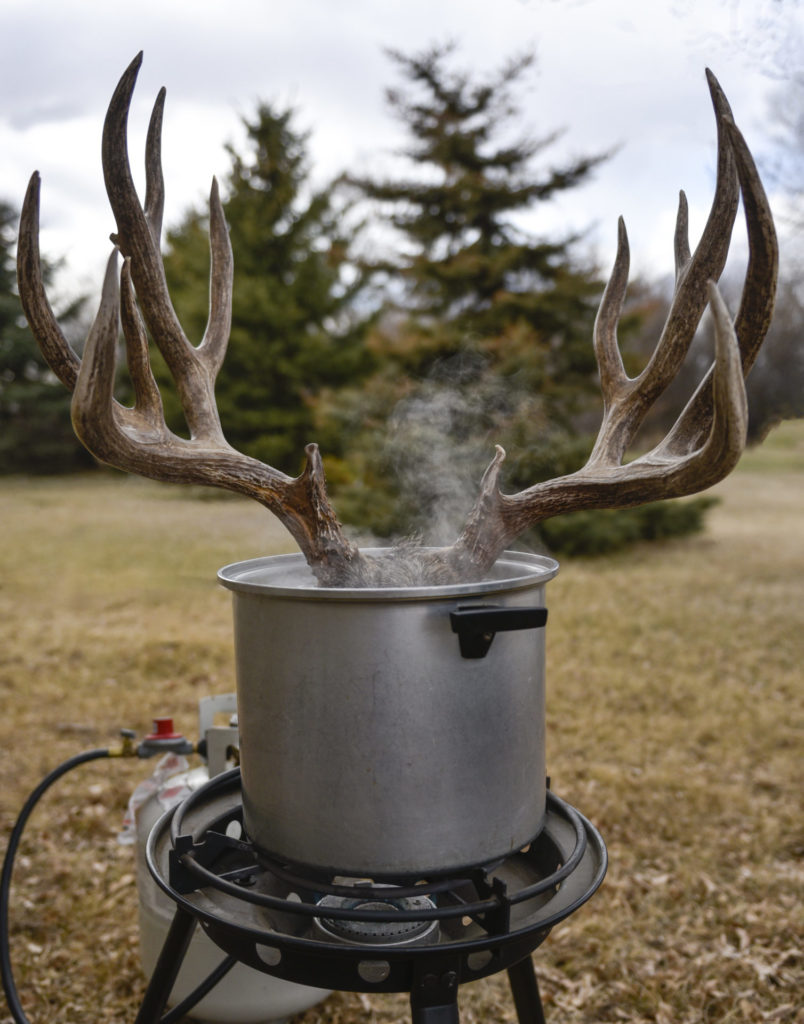 To remove meat from an animal skull, use a large pot with a water and sodium carbonate solution and heat with a propane burner.