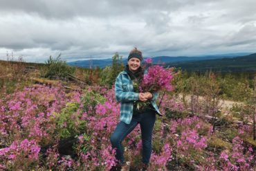 The author harvesting fireweed for tea and jelly in an old burn.