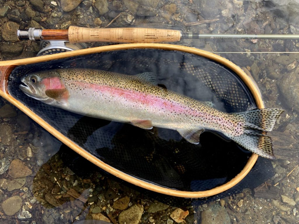 A stunning wild rainbow trout taken on a #12 olive wulff variation.