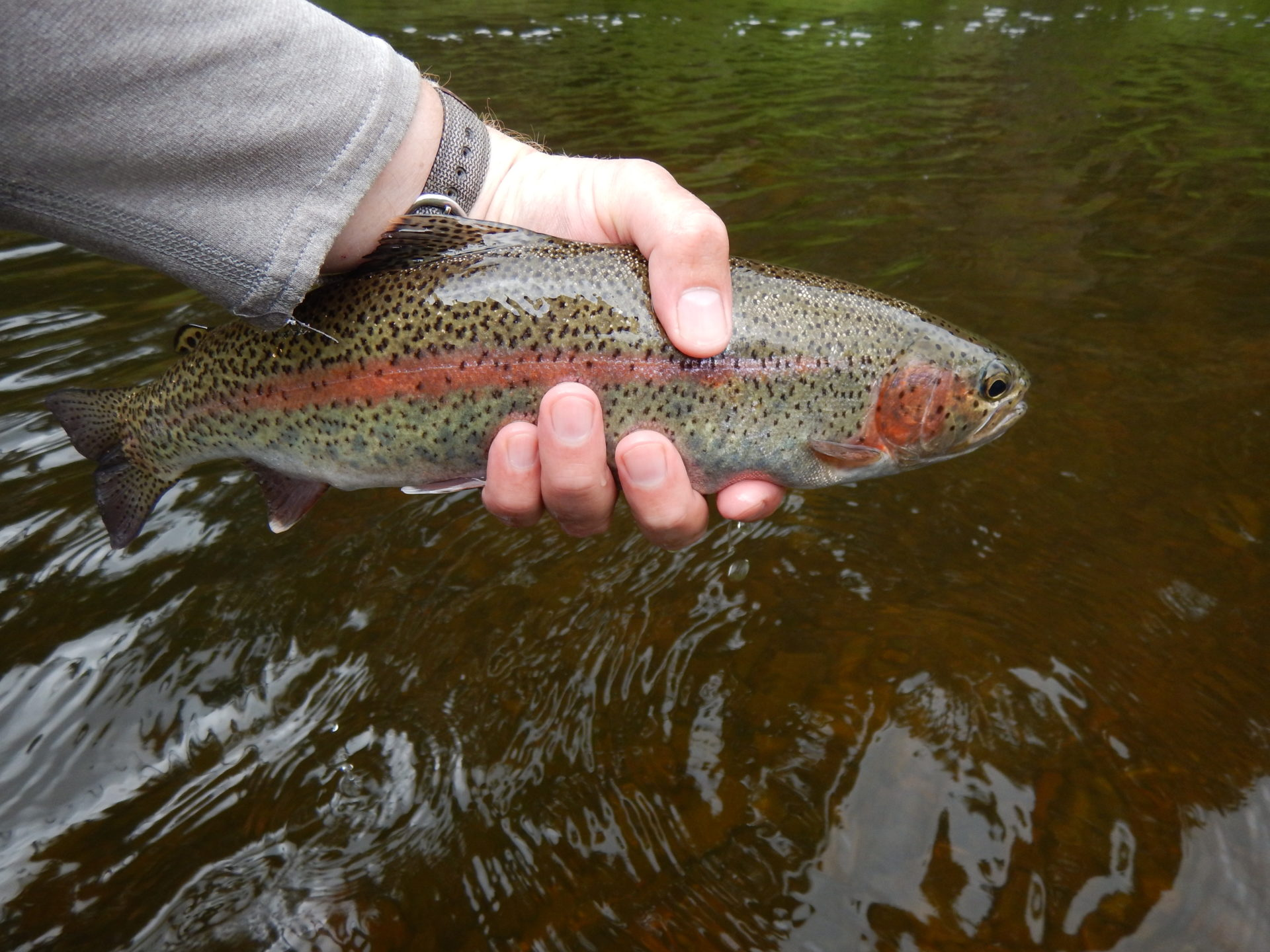 Fly Fishing 101 Leaders Made Easy Bc Outdoors Magazine