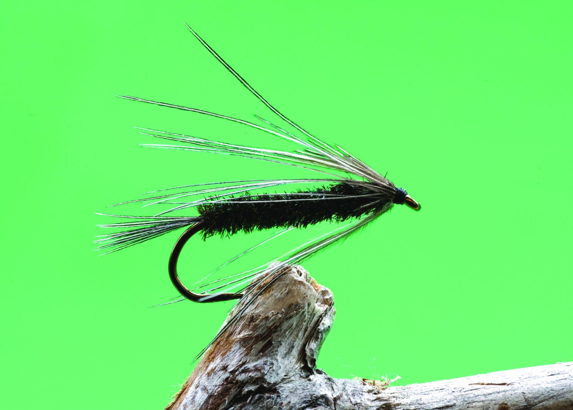 Peacock Carey.