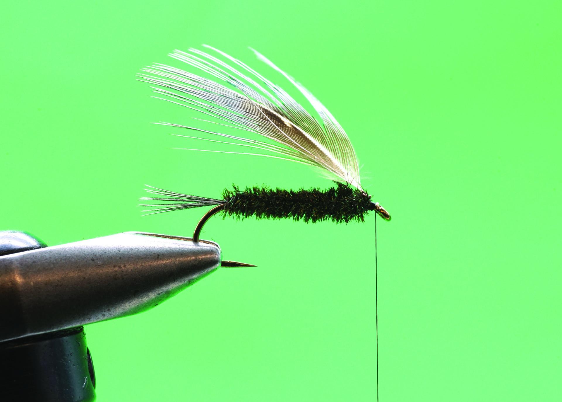 Peacock Carey: Step 5.