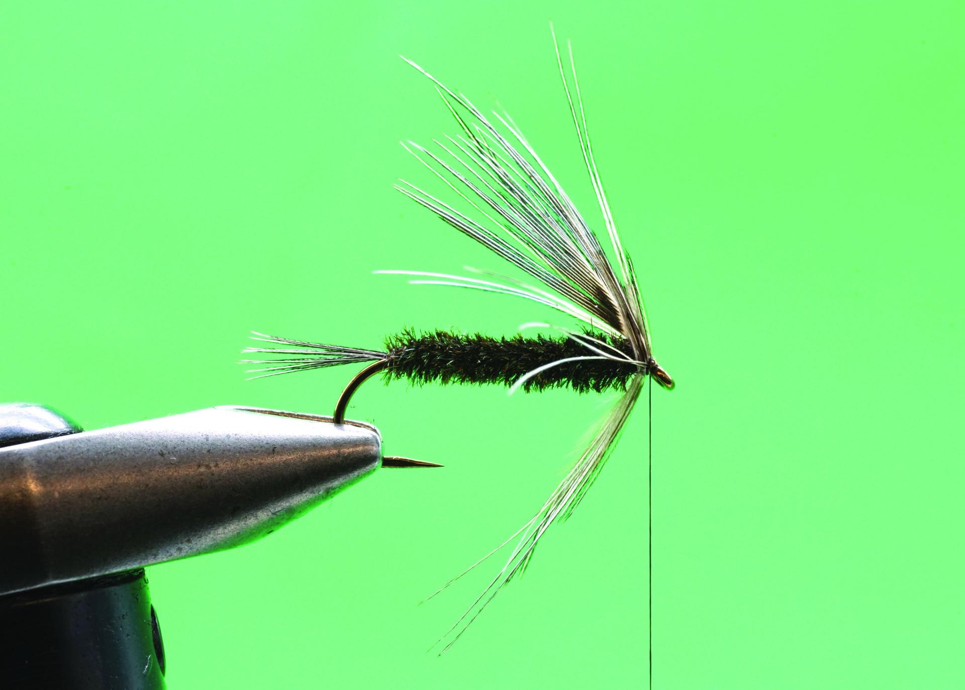 Peacock Carey: Step 6.