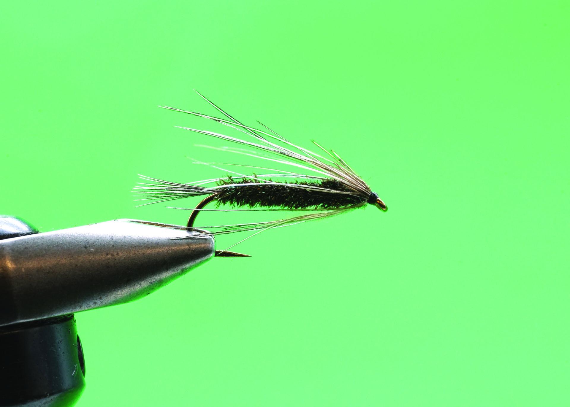 Peacock Carey: Step 7.