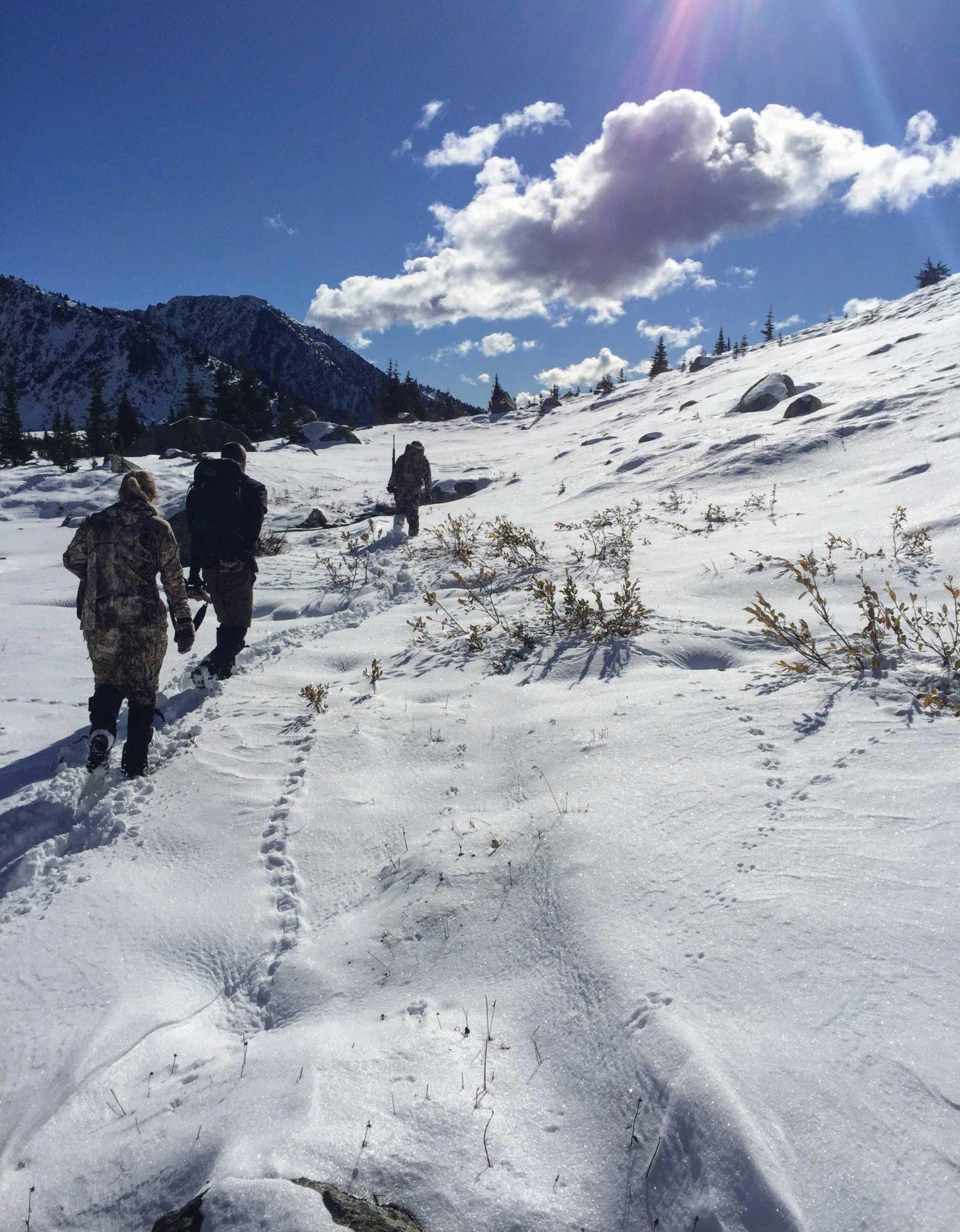 Alpine Critter Trails