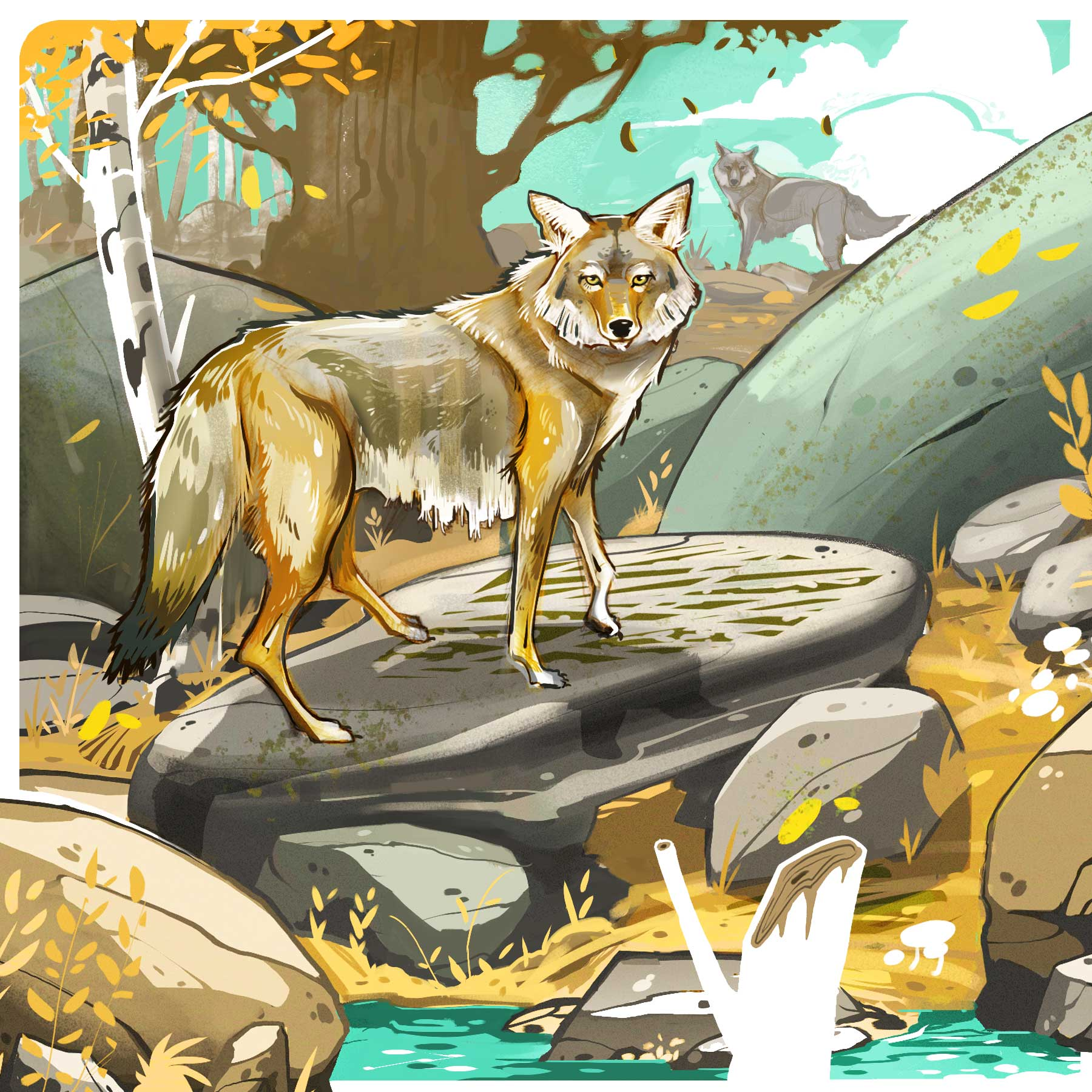 Coyotes. Illustration by Cory Proulx.