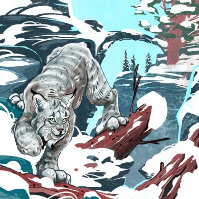 Lynx by Cory Proulx.