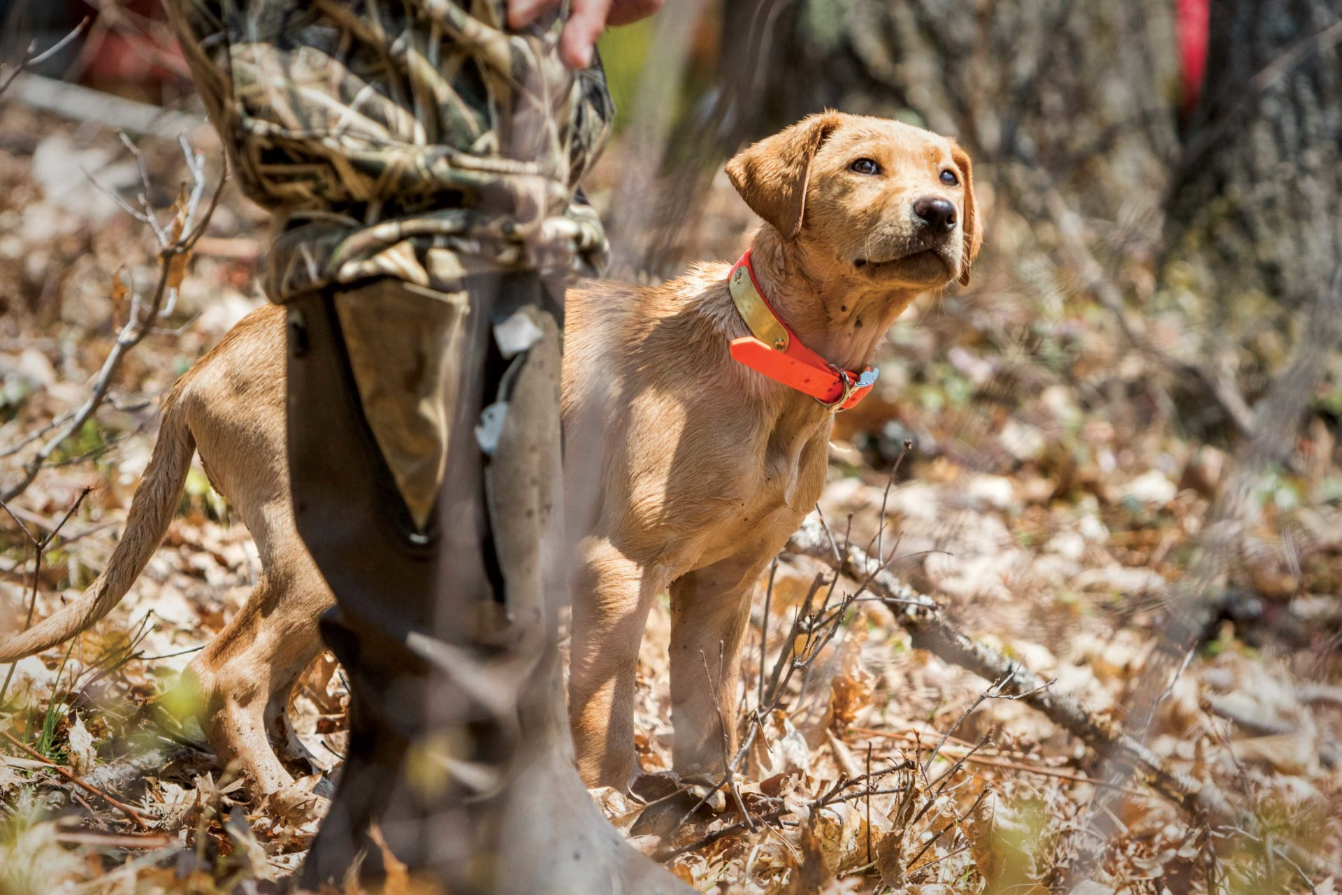 Your hunting partner will be with you for a long time. Take your time when it comes to choosing the right puppy.