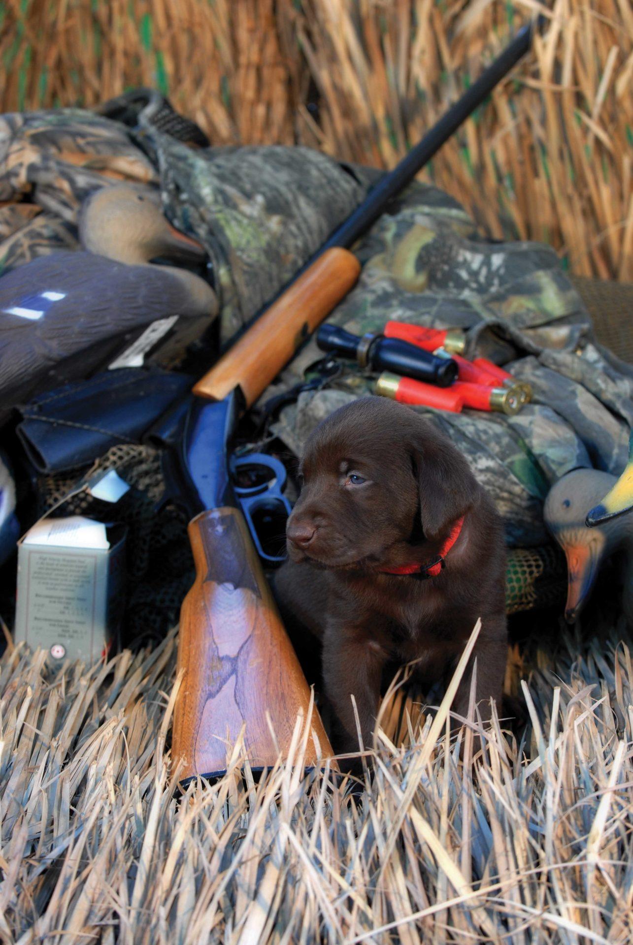 Hunting puppy.