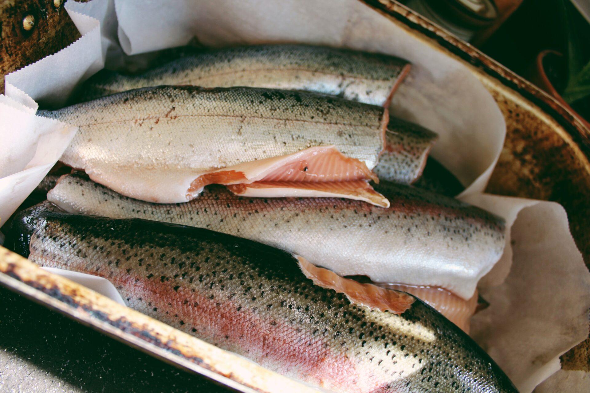 Rainbow trout. Credit: Raeanne O'Meara.