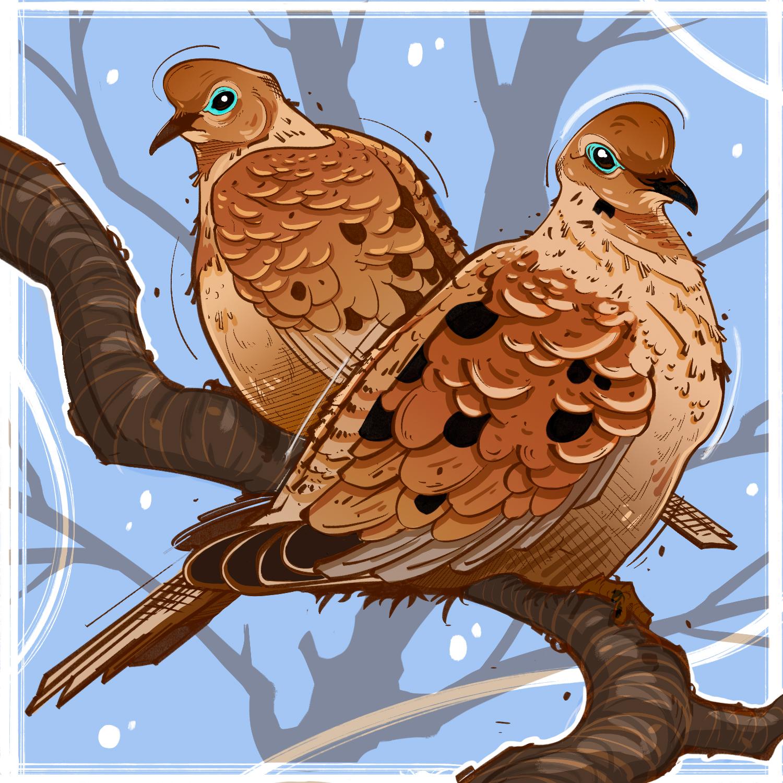 Doves. Illustration by Cory Proulx.