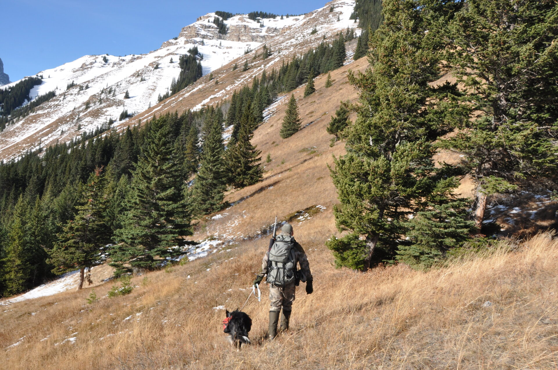Pack dogs are required to be leashed in British Columbia.