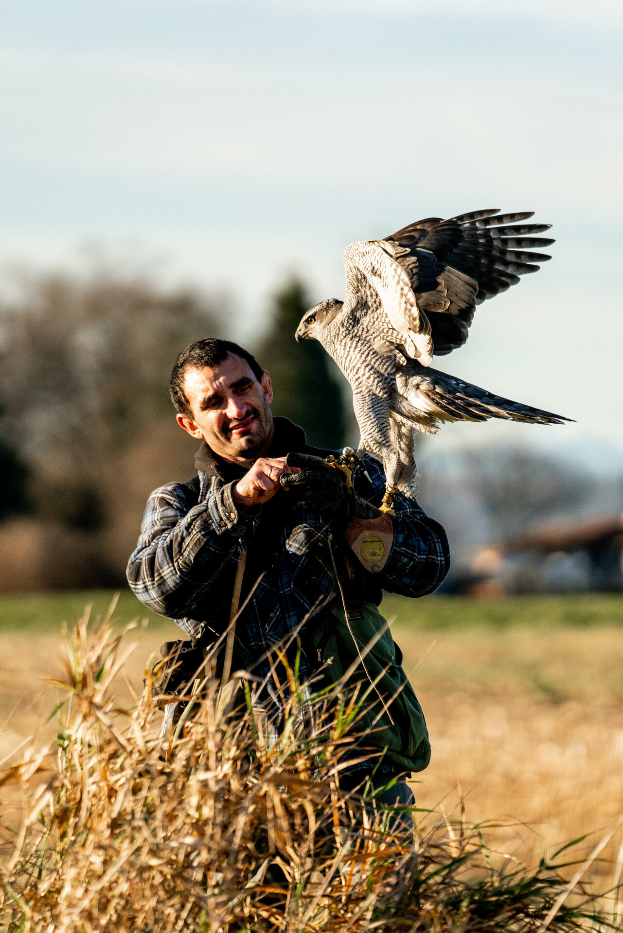That's all falconry is – developing a hunting partnership with a bird of prey. Photo by Chase White.
