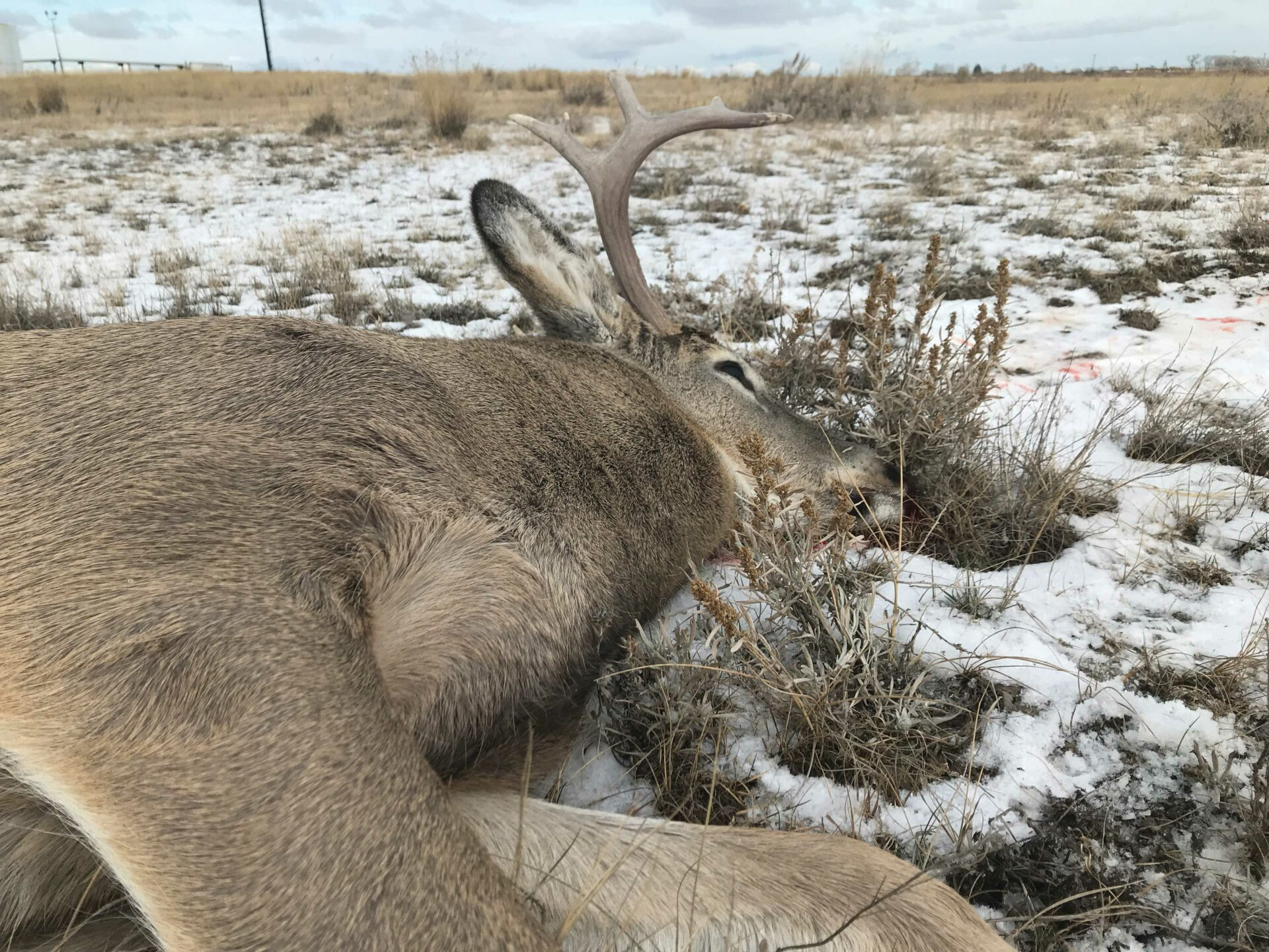 Your first deer is just a heap of dead animal until someone guides you through the process.