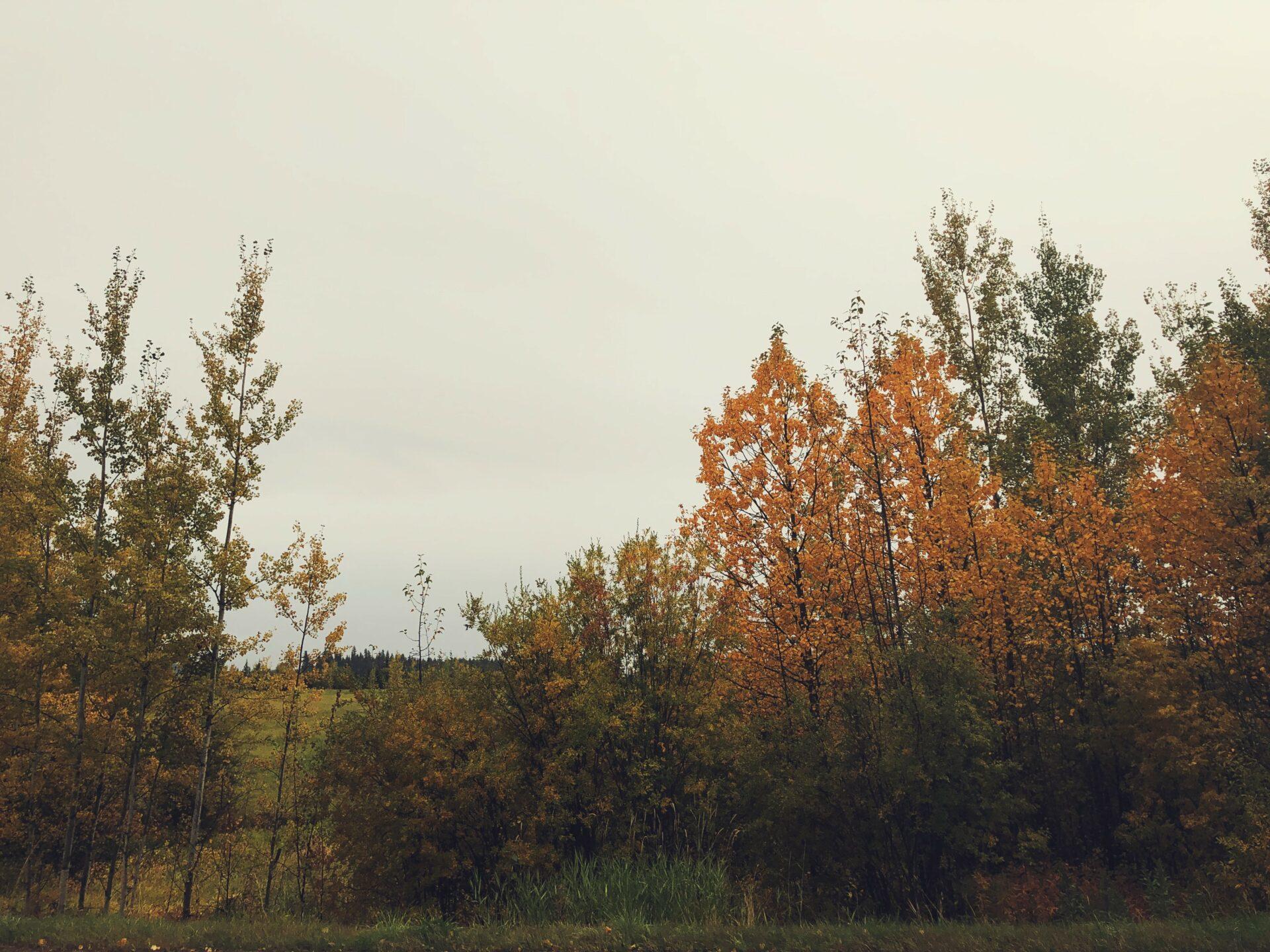 Foraged Tea On A Foggy Fall Morning. Credit: Raeanne O'Meara.